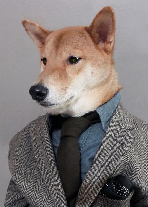 menswear dog2
