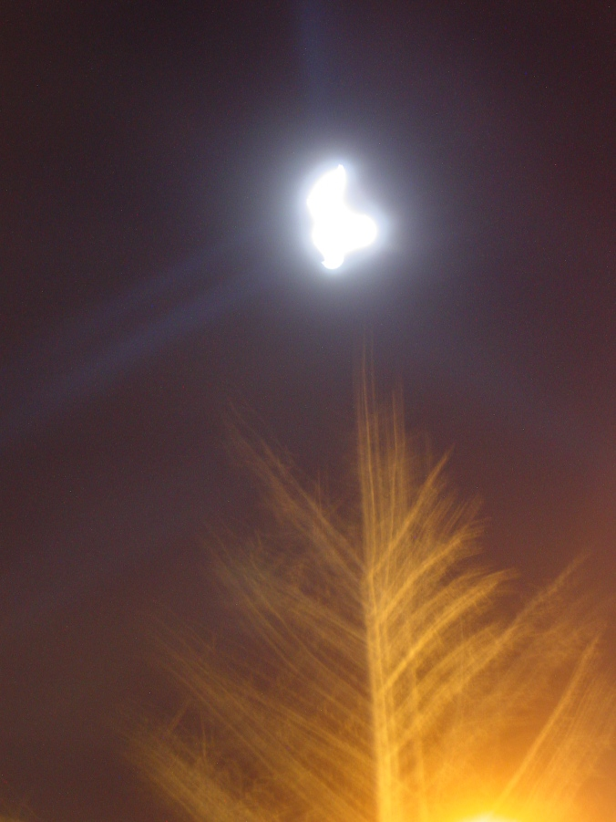 Blurred moon tree